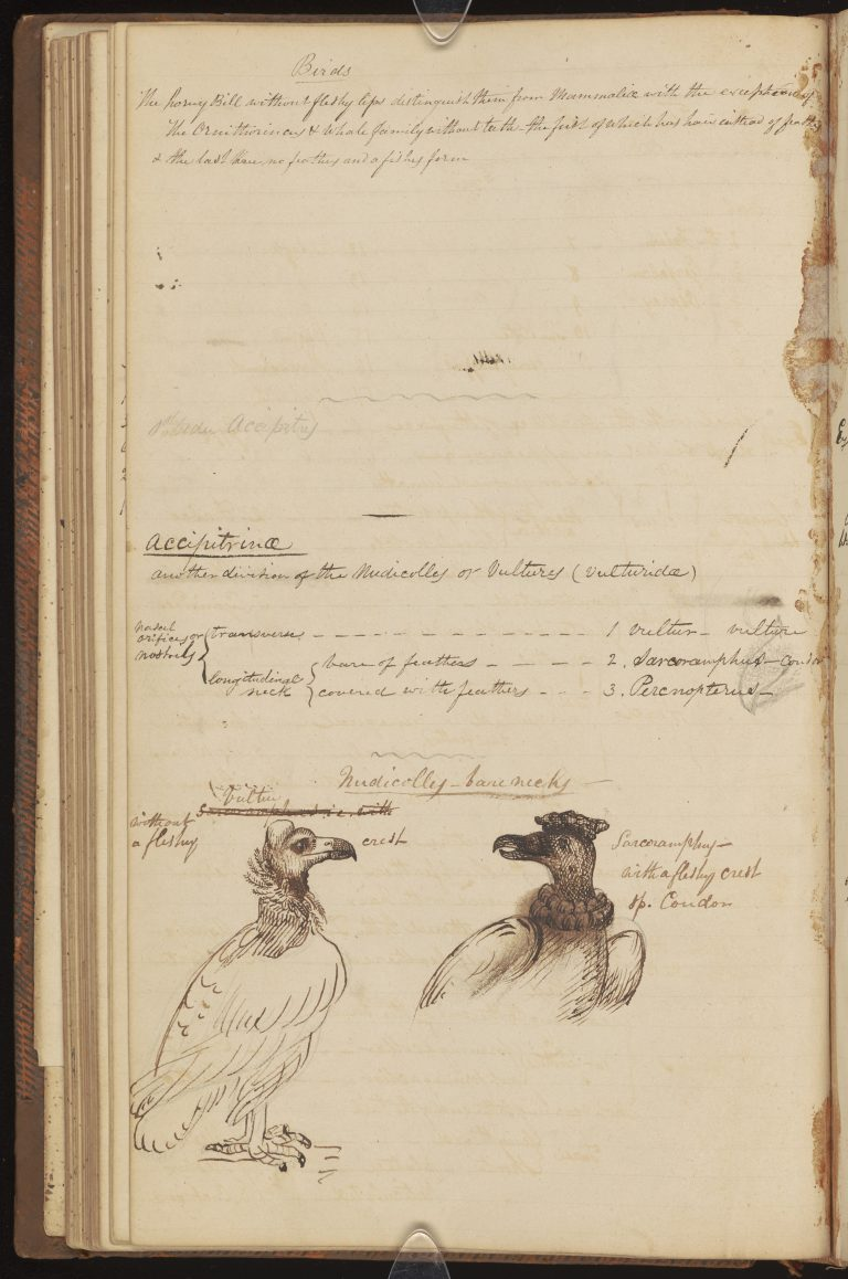 Bird Notes and Sketches