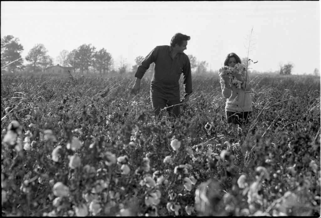 June Carter Cash and Johnny Cash in a Cotton Field