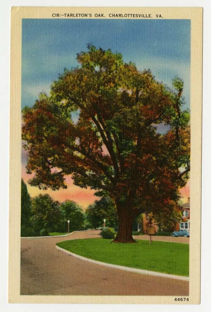 Tarleton's Oak