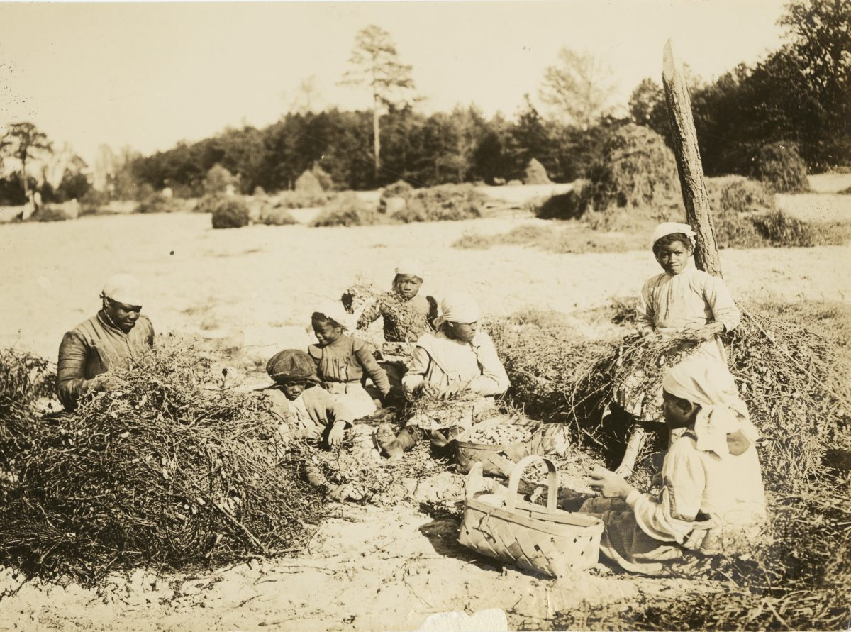 Peanut Farmers in Virginia