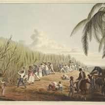 Cutting the Sugar-Cane