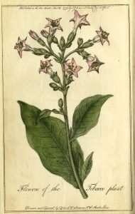 Tobacco in Colonial Virginia