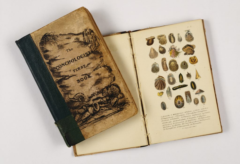 The Conchologist's First Book: or