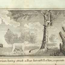 An American having struck a Bear but not killed him